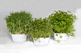 Organic Microgreens 3-pack Growing Kit